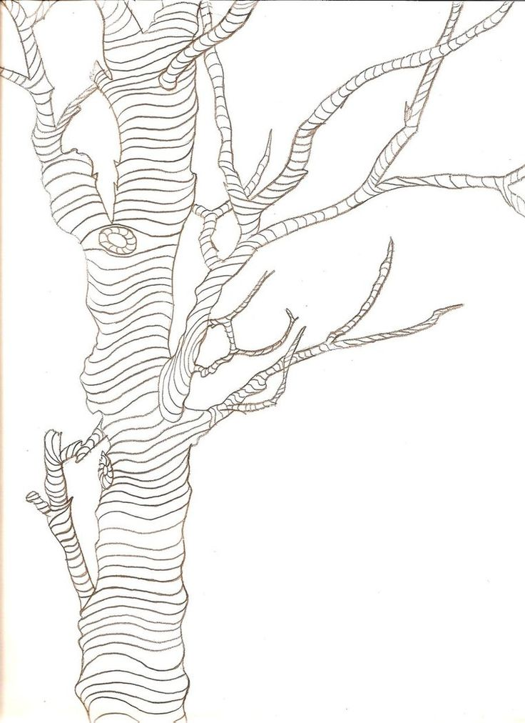 Contour Line Drawing Leaves : Best how to draw realistic trees plants bushes and