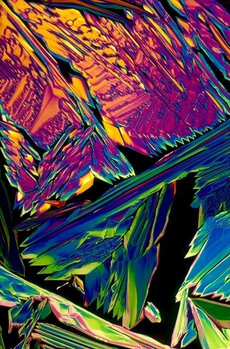 Czech Pilsner under a microscope