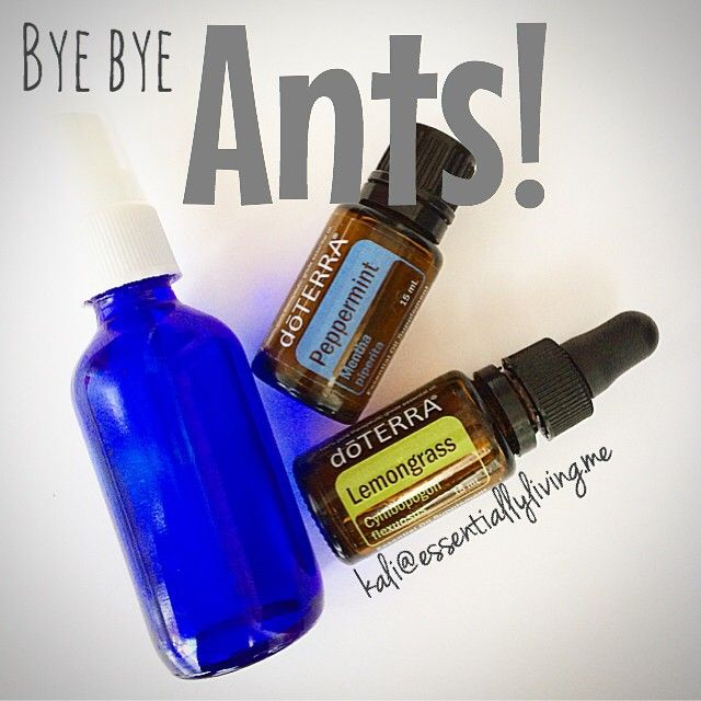 Spring is here, the sun is out ☀️, and so are the ants ! YUCK! Every year they manage to make their way into the house when it starts to warm up. With a toddler and pets in the house, I am obviously not going to use a toxic ant killer. So, I immediately grab my oils and whip up an ant spray. In a 2 ounce glass spray bottle: 10 Peppermint 10 Lemongrass Topped off with water Shake well and spray on ant trail, window sills, and door ways. Bye bye ants! And as an added bonus, my house smells