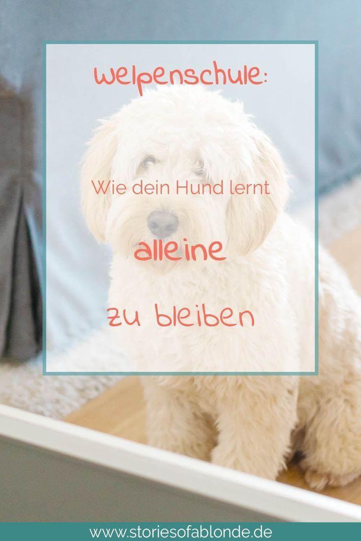 Welpen Alleine Lassen Einfaches Training Mit Furbo Hunde Welpen Welpen Hunde Erziehen Und Hunde