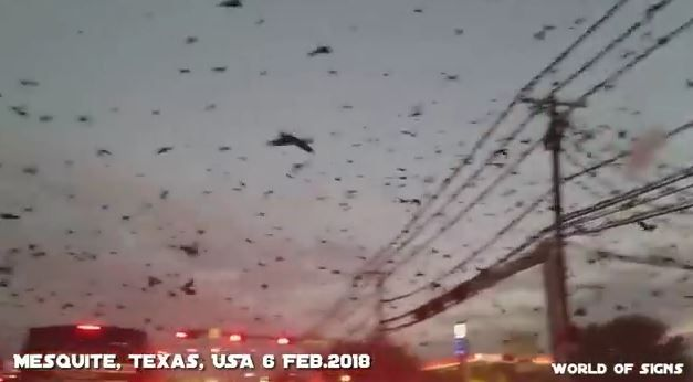 Birds Gone Mad