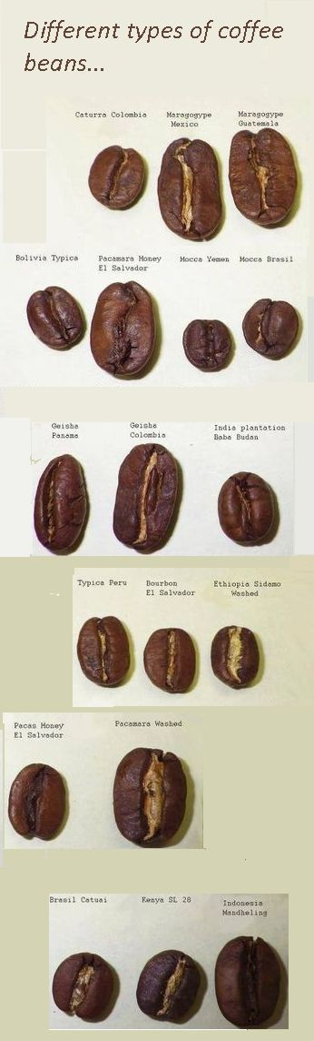 What are the different types of coffee beans. Does the type of coffee bean you choose to brew really make a difference? #Coffeelover