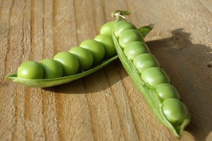 Come piantare e coltivare piselli biologici