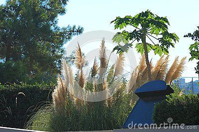 Typical rural roadside flora. Pefki. Rhodes, Greece