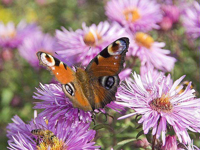 Semis de fleurs utiles au jardin : les conseils de jardinage d'Hubert en vidéo.