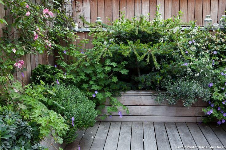 17 meilleures id es propos de vigne grimpante sur pinterest plante grimpante treillage. Black Bedroom Furniture Sets. Home Design Ideas