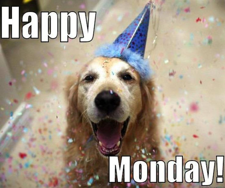 Image result for happy monday dog images