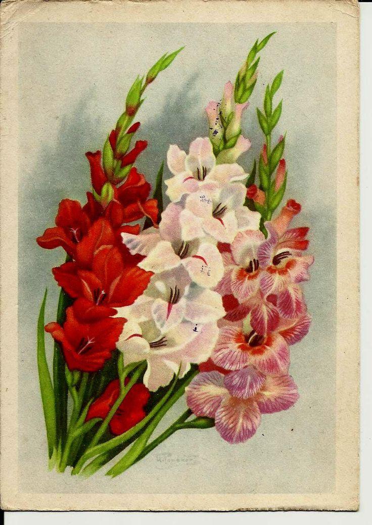 Gladioluses, Flowers, Vintage Russian Postcard artist Romanov print 1962 by LucyMarket on Etsy