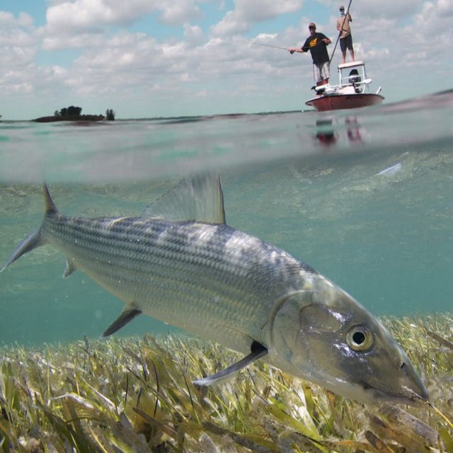 100 best images about let 39 s catch fish in saltwater on for Alaska fly fishing goods