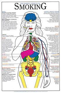 Harmful Effects of Smoking Chart