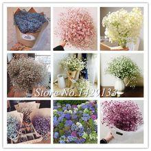 Качим Метельчатый Гипсофила L. UNIDs 300 семян Семена цветов Выращивание Просто красивый цветок Easy Свободная перевозка груза (Кита (материк))