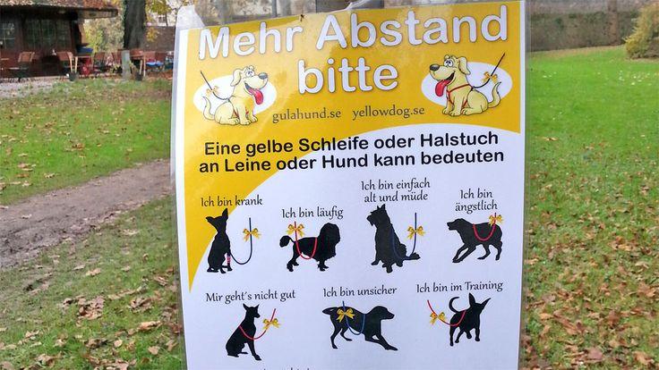 Wieso trägt ein Hund eine gelbe Schleife? Die Aktion Gelber Hund (Gulahund) ist nicht nur für sensible Hunde eine Hilfe ...