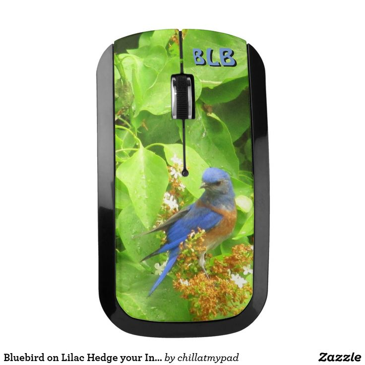 Bluebird on Lilac Hedge your Initials Wireless MouseBluebird on Lilac Hedge your Initials Wireless Keyboard. Add some color and beauty to your computer accessories. A great gift for bird lovers and bird watchers. Check out my store for a matching mouse pad, computer keyboard and charging station.