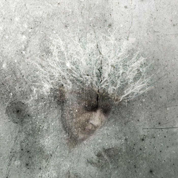 Päivi Hintsanen: Veil of Rime, 2013