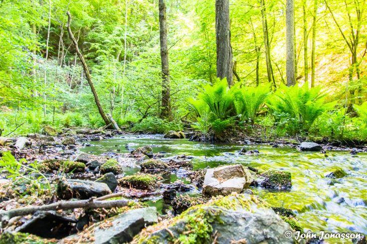 Forsakar nature reserve
