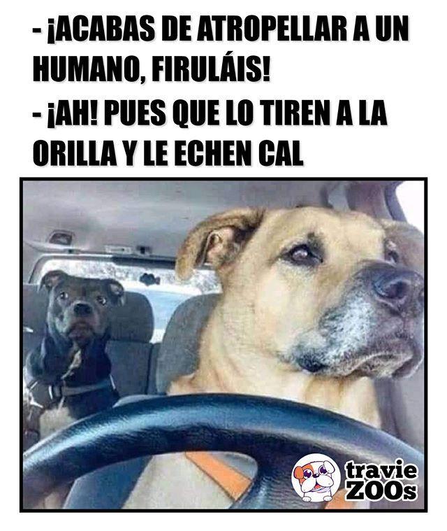 En Un Mundo Paralelo Dogs Perros Humanos Car Auto Drive Memes Divertidos Sobre Perros Memes Memes Divertidos