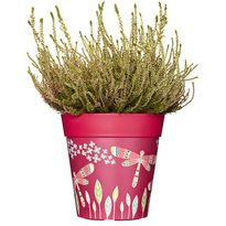 NEW!  Pink dragonflies planter, plastic plant pot, 22cm 5L