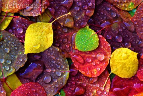 Image result for art elements colour photography
