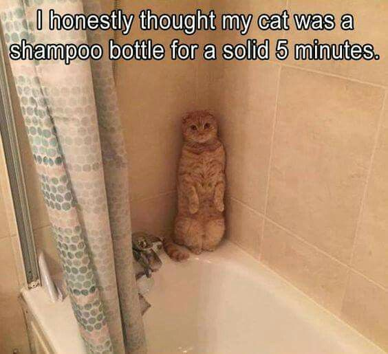 Thought my cat was a shampoo bottle for a minute...