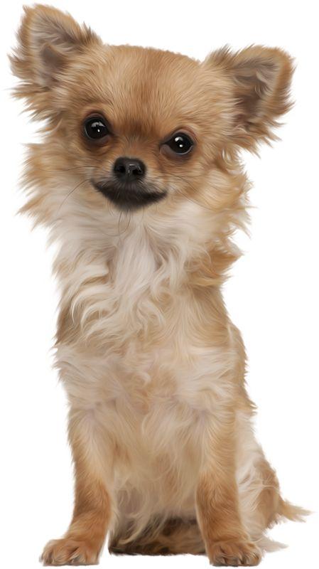 DOGS | Записи в рубрике DOGS | Дневник mileidi46 : LiveInternet - Российский Сервис Онлайн-Дневников