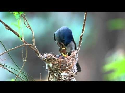 ocells que fan el niu, cogen les pus, alimenten les cries. La madre naturaleza; La naturaleza y la madre