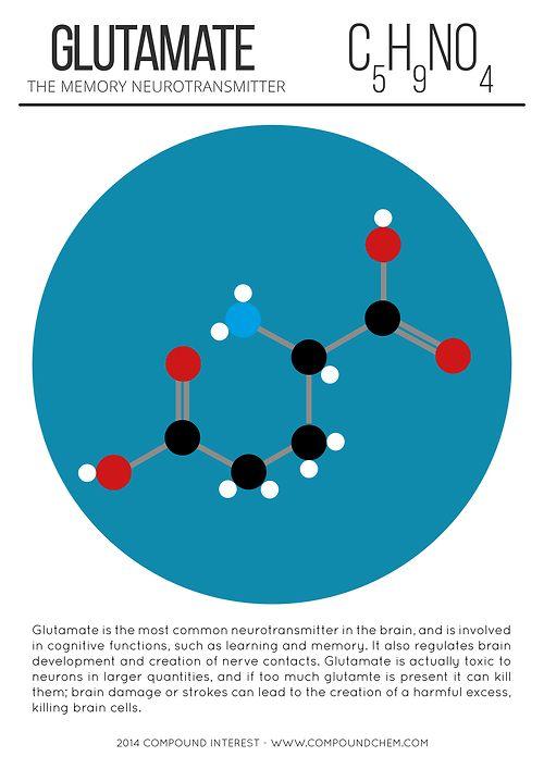 Glutamate ~ the Memory neurotransmitter