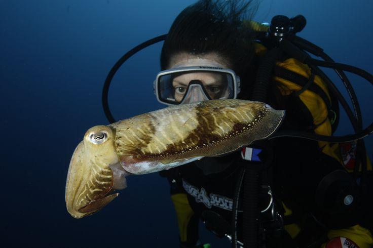 No Manta Diving Center pode mergulhar nos mares da Madeira e conhecer esta e outras espécies. | In Manta Diving Center you can dive in Madeira's seas and get to know our species.