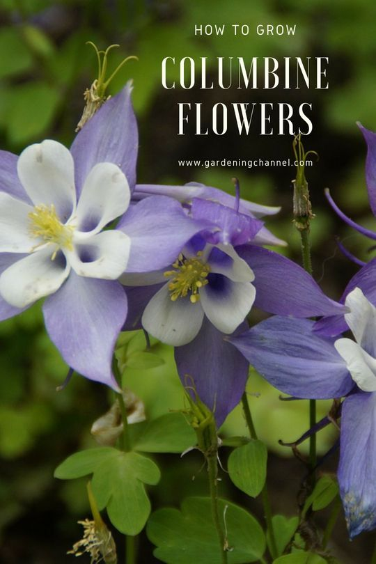Pin On Flowers How To Plant And Care For Them