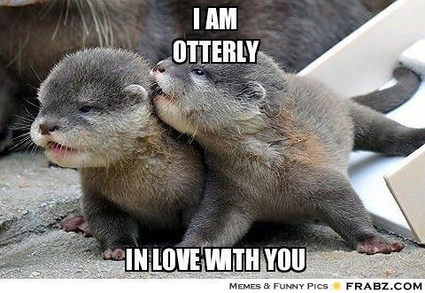 otter positive meme - Google Search