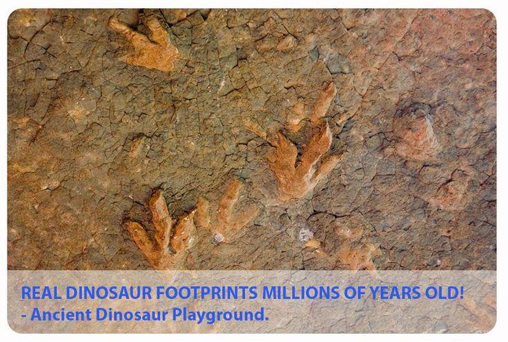 Amazing dinosaur footprints. Explore a real ancient dinosaur playground #Lesotho #adventure
