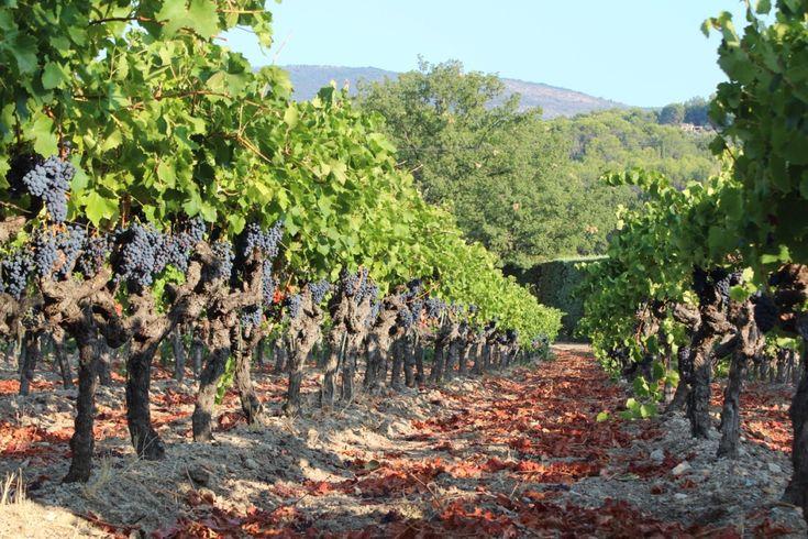 Wholesale of Provence Wines appellation (AOP, AOC) Côtes de Provence