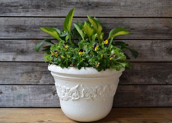 Get This Spring Must Have: Hosta In Containers. Garden ClubShade ...