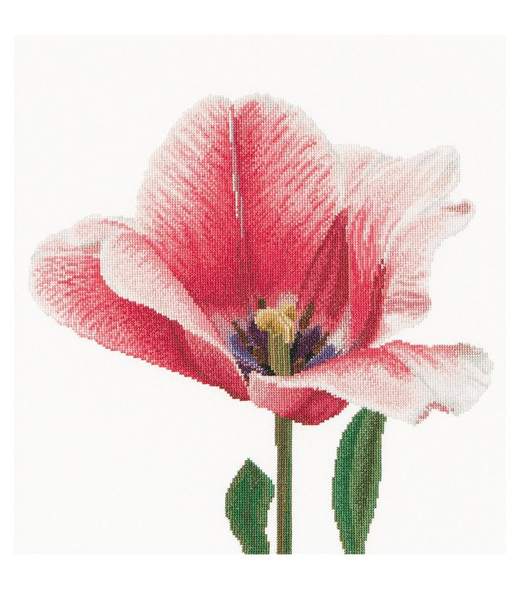 Thea Gouverneur Pink Darwin Hybrid Tulip Counted Cross Stitch Kit