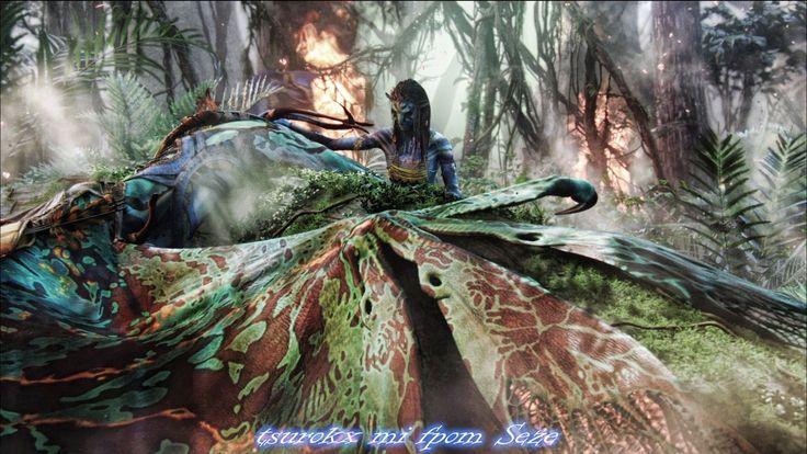 Wallpaper Neytiri Seze Avatar Hd Movies 4115: 127 Best Cinéma L Avatar Images On Pinterest