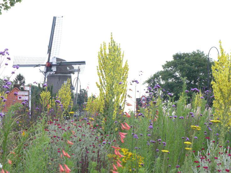 prairie achtige beplanting in openbaar groen gemeente Ommen. Foto van Jikke Hamerpagt