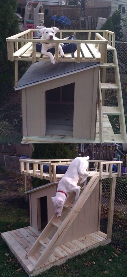 The guy who built a deck for his dogs house. I need this!