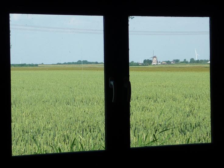 Uitzicht vanuit projectlocatie. #akker #molen #groen