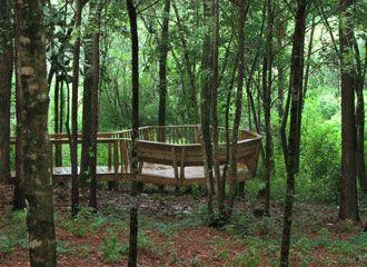 forest meditation platform
