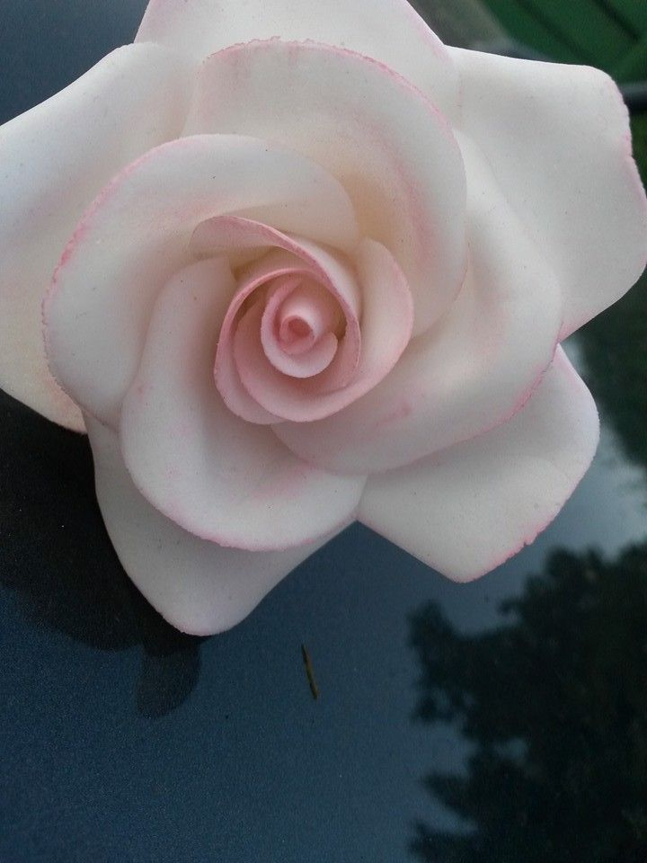 White and pink fondant rose!