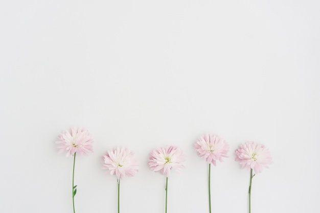 Light Pink Flower Wallpaper Floral Wallpapers