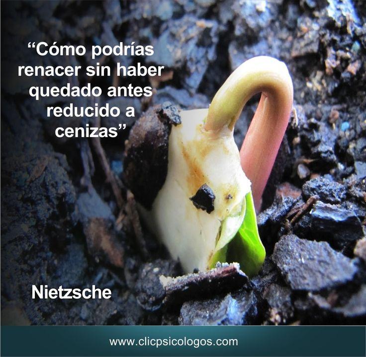 amor. Nietzsche