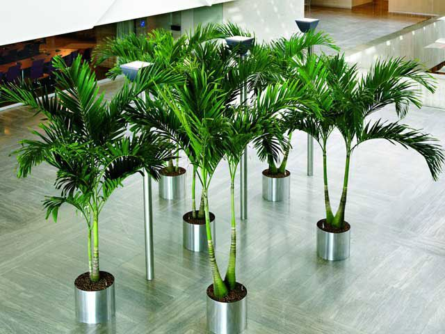 Grote planten voor grote ruimtes.