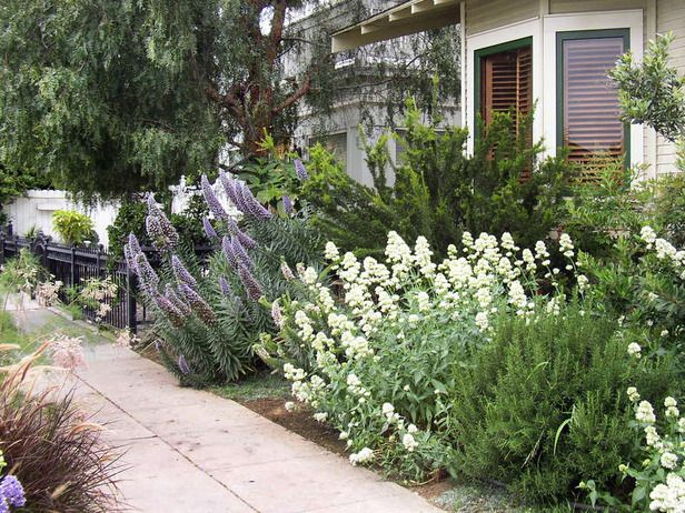 17 best images about front yard on pinterest gardens for Less maintenance plants