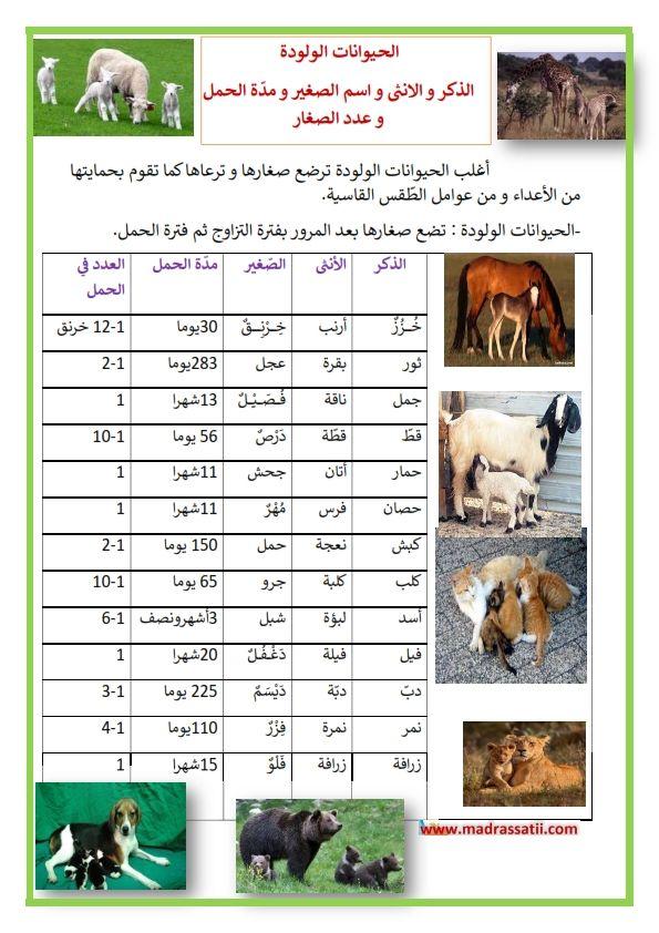 الحيوانات الولودة الذكر و الانثى و اسم الصغير و مد ة الحمل و عدد الصغار Madrassatii Com Photo Farah Education