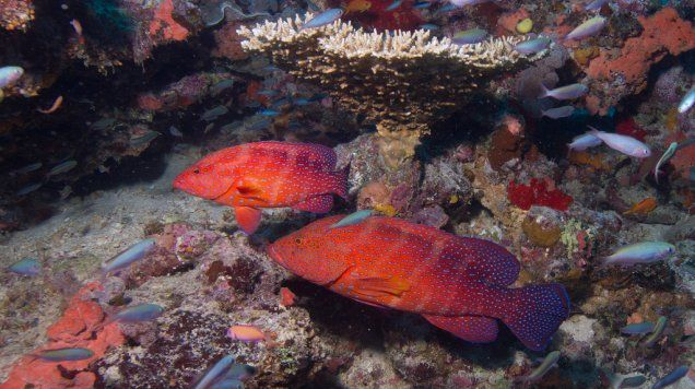 No-Take Marine Protected Areas: Having Your Fish and Eating Them Too | Smithsonian Ocean Portal