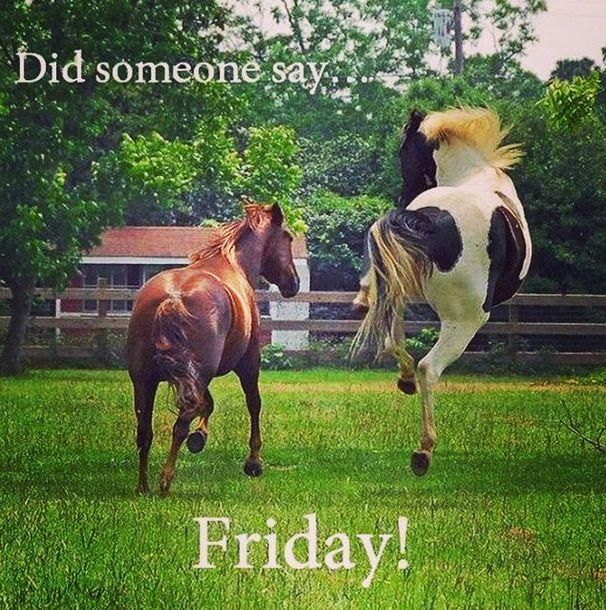 Happy Friday Have Plenty Of Horsey Fun Horses Funny