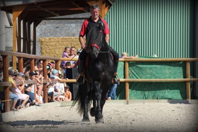 Frisons a vendre -JACOB né le 5avril 2011,entier, Débouré,monté , calin .pére ANDRIES 415 http://www.equirodi.com/annonces/cheval-a-vendre/frison-156347.htm