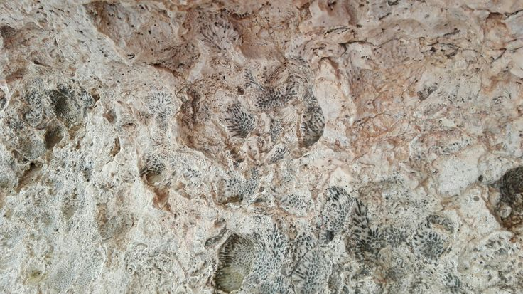 Fossils,  sharks bay, red sea