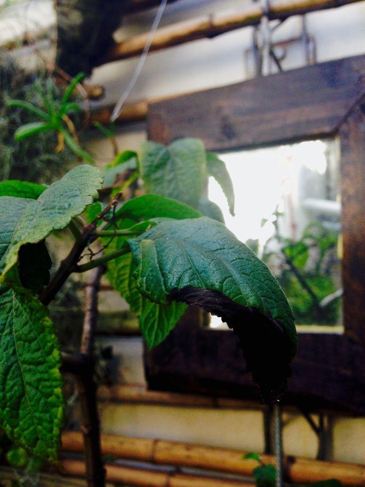 #5 Reflection_Rooftopgarden_Durban_SouthAfrica #plants#nature # gardening