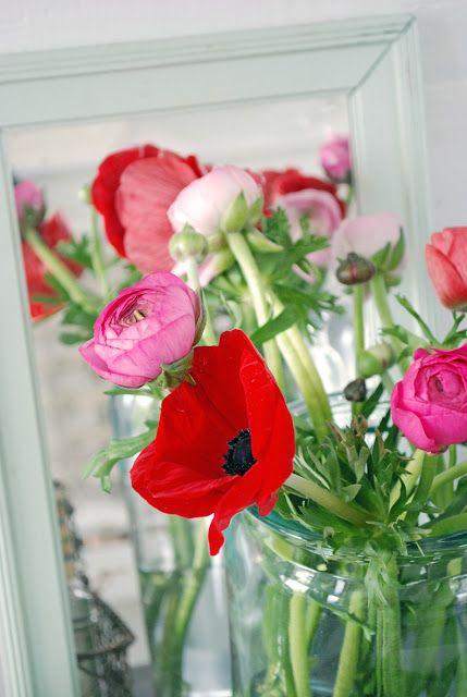 Vita Ranunkler: Blommor